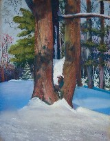 Snow Tree in Maine